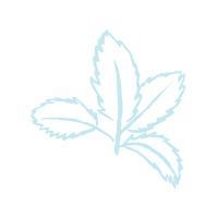 Mint / Muscle & Nerve Formula